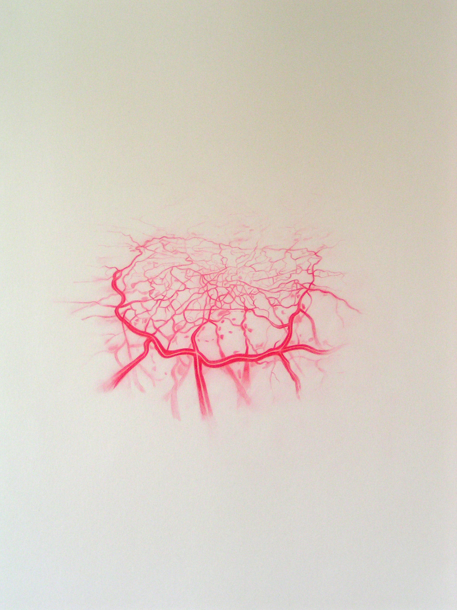 Emma J Williams 'Untitled Red Drawing No.9' 2008 pencil on paper